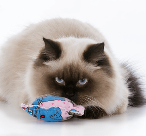 Keep Your Snowed-In Pets Amused With These DIY Pet Toys Cat Image