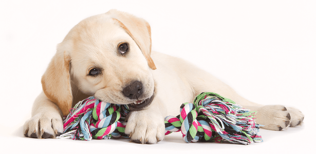 Keep Your Snowed-In Pets Amused With These DIY Pet Toys Puppy Image