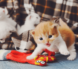 Keep Your Snowed-In Pets Amused With These DIY Pet Toys Kitten Image